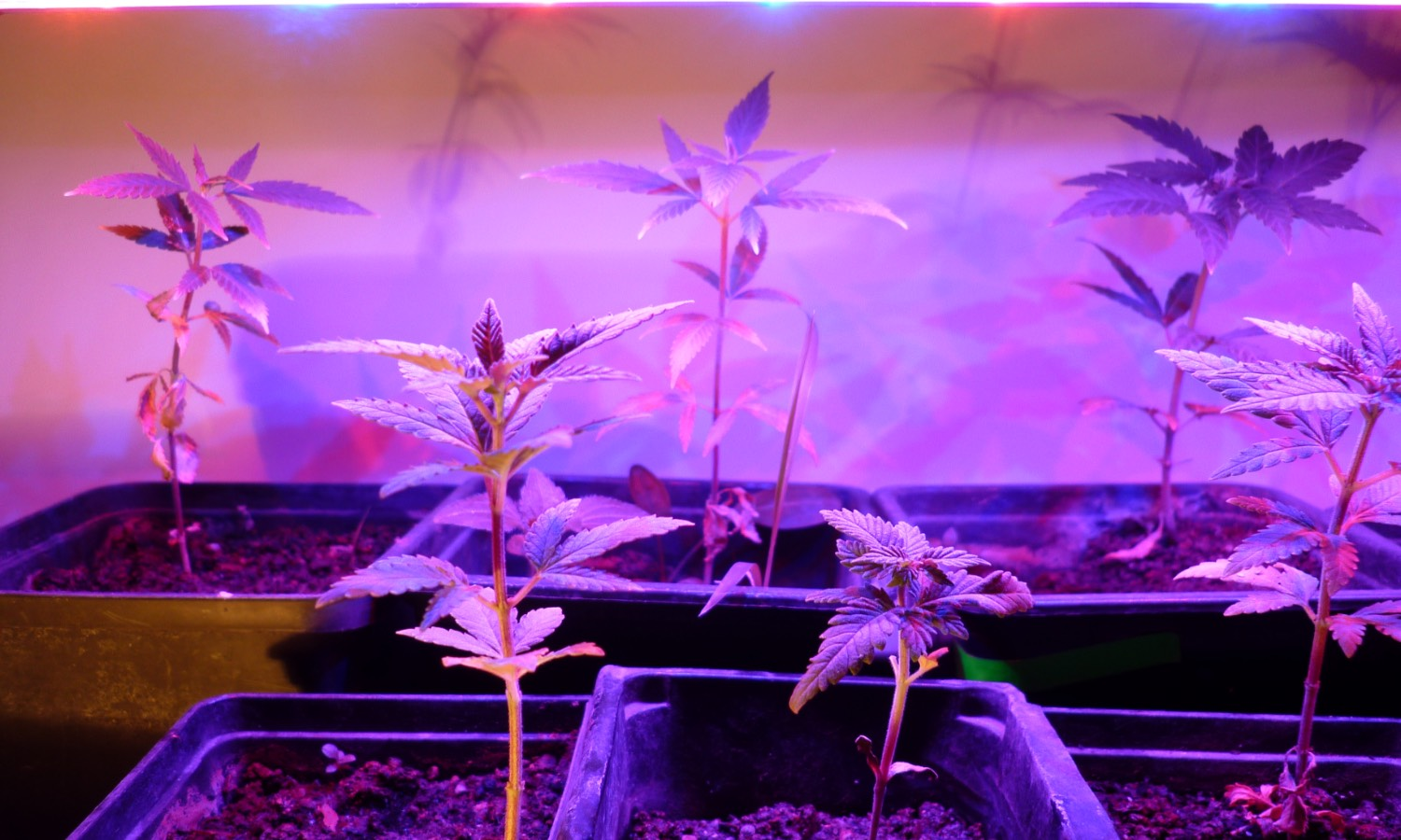 the best grow lights value 2019